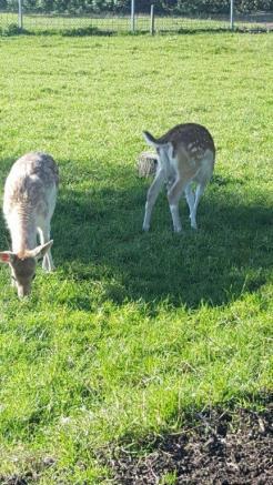 Beheer Hertenparken en Dierweides Gradient Natuurbeheer
