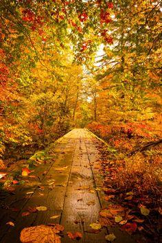есенна пъстрота