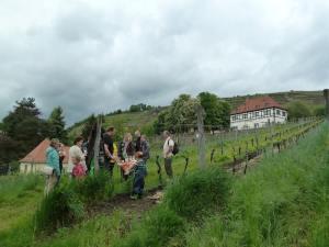 Kulinarische Weinwanderung @ Ecke Hoflössnitzstr./Weinbergstr. gegenüber Aust