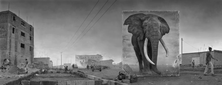 ROAD-WITH-ELEPHANT-4000px more contr