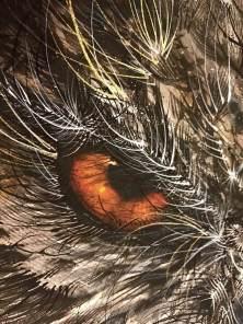 hua-tunan-night-luminescent-pearl-print-close-up-owl-detail-22