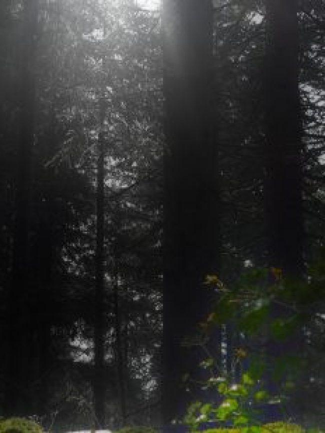 Lichtung, Wald, moos, bäume, trees, foto, fotografie, moose, satt, bildbearbeitung, grafik, design, stock images, lizenzfrei, license free