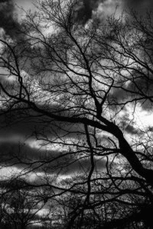 baum, wolken, dramtisch, schwarz weiß, black white, canon, fotografie, photography, image editing, media, waldbrand media, bildbearbeitung, grafik, design