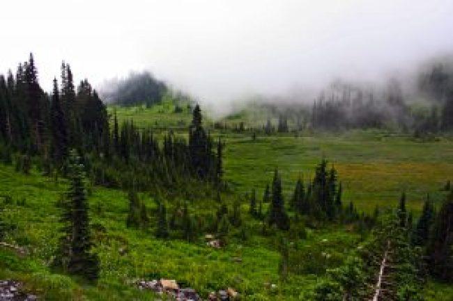 Paradise, Mount Rainier, Washington, trees, forest, lawn, berg, mountain, altitude, evergreen, tannen, nadelwald, lichtung, nebel, nebelwald, fog, in den wolken,usa, seattle, rocky mountains, twin peaks