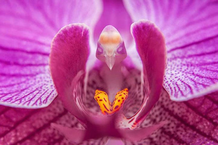 MothOrchidPhalaenopsis17FlowersThatLookLikeSomethingElse1