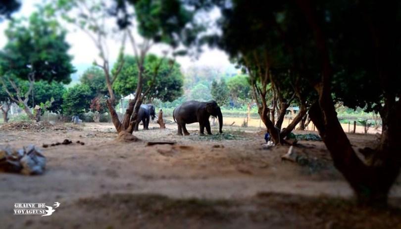 Baanchang elephant park thailande