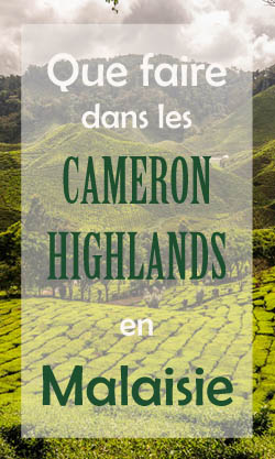 Que faire aux Cameron Highlands