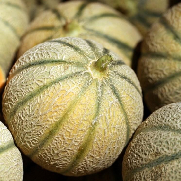 """Résultat de recherche d'images pour """"melon,"""""""