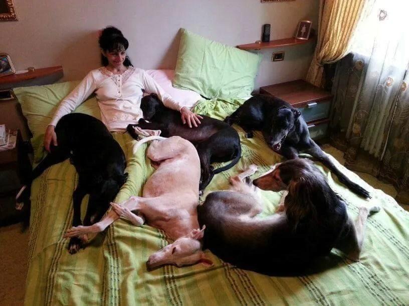 Monica Vaglietti with five Greyhounds