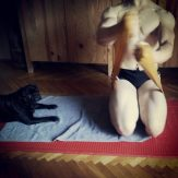 Working out with Vader... my pug