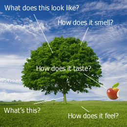 Try to answer: What does it look like? How does it smell? What is it? How does it feel? How does it taste?