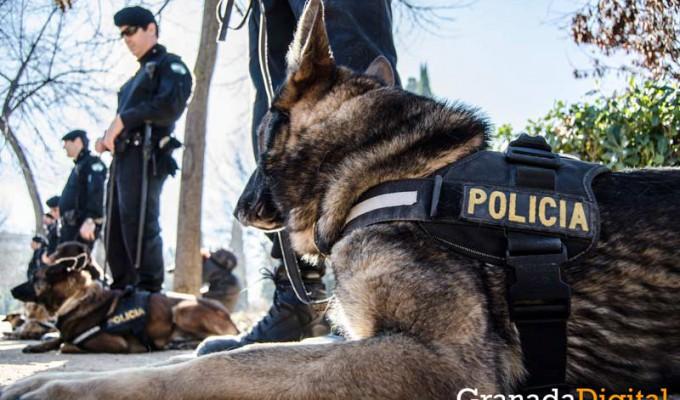 Taller-Policía-canina-3