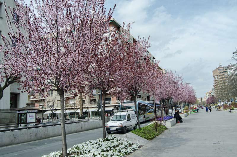 Primavera-(1-de-1)-Granada