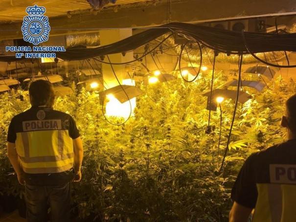 plantación cannabis motril marihuana