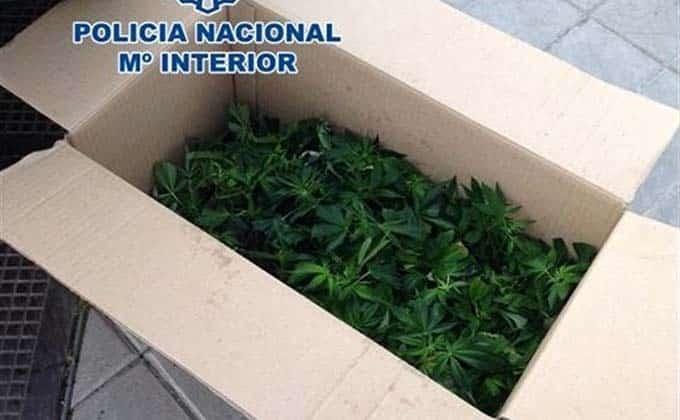 caja-marihuana