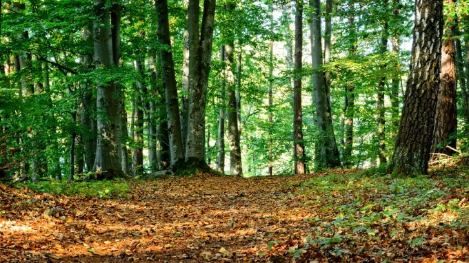 forest-972791_960_720