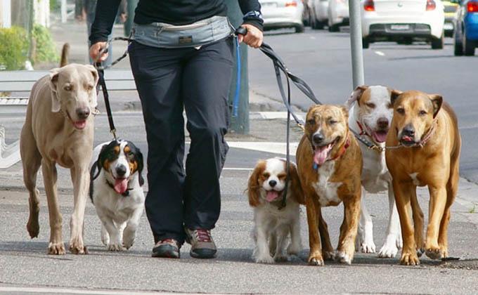 dueño-perros
