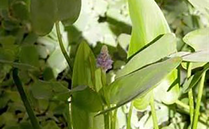 planta-medicinal-ep
