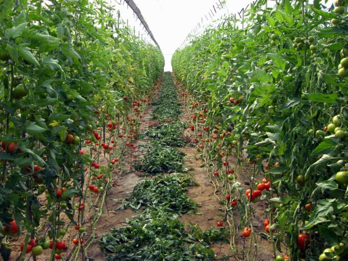 agricultura-andalucia-junta
