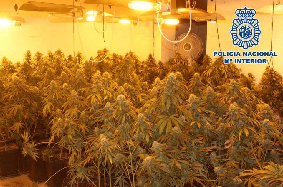 Plantacion_indoor_01