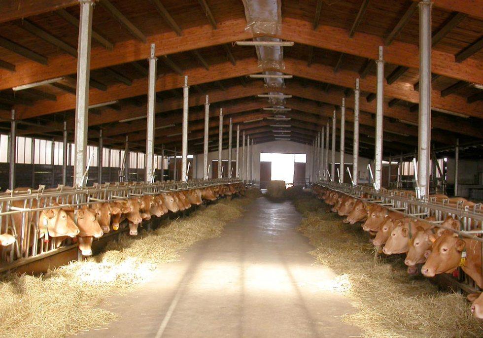 Stalla fattoria Grana d'Oro