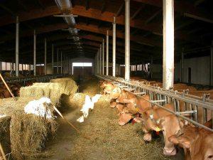 Stalla azienda agricola Grana d'Oro