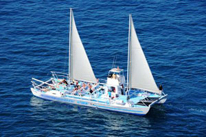 Daily Catamaran Dolphin Spotting Cruise Gran Canaria