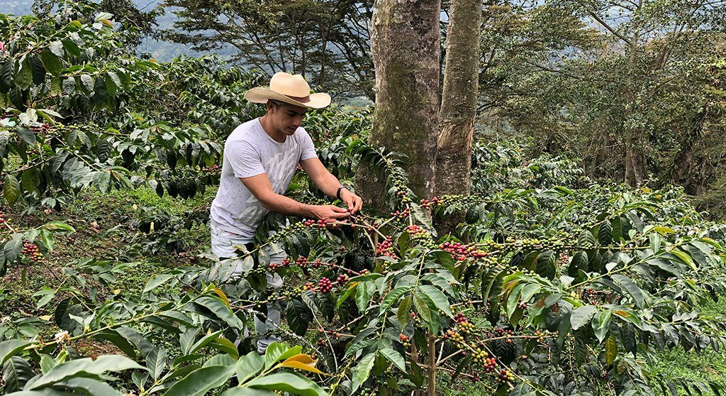 Coffee Farms in Colombia