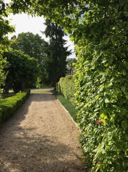 Dans le parc de Grand Bouy, l'allée qui mène à la piscine est bordée de charmilles taillées et de lavandes Hidcote
