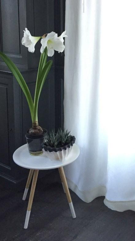 Fleur d'amaryllis blanc en pot sur guéridon scandinave.