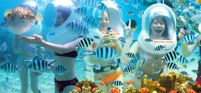 Bali Sea Walker | Bali Tour | Bali Driver | Bali Tour ...