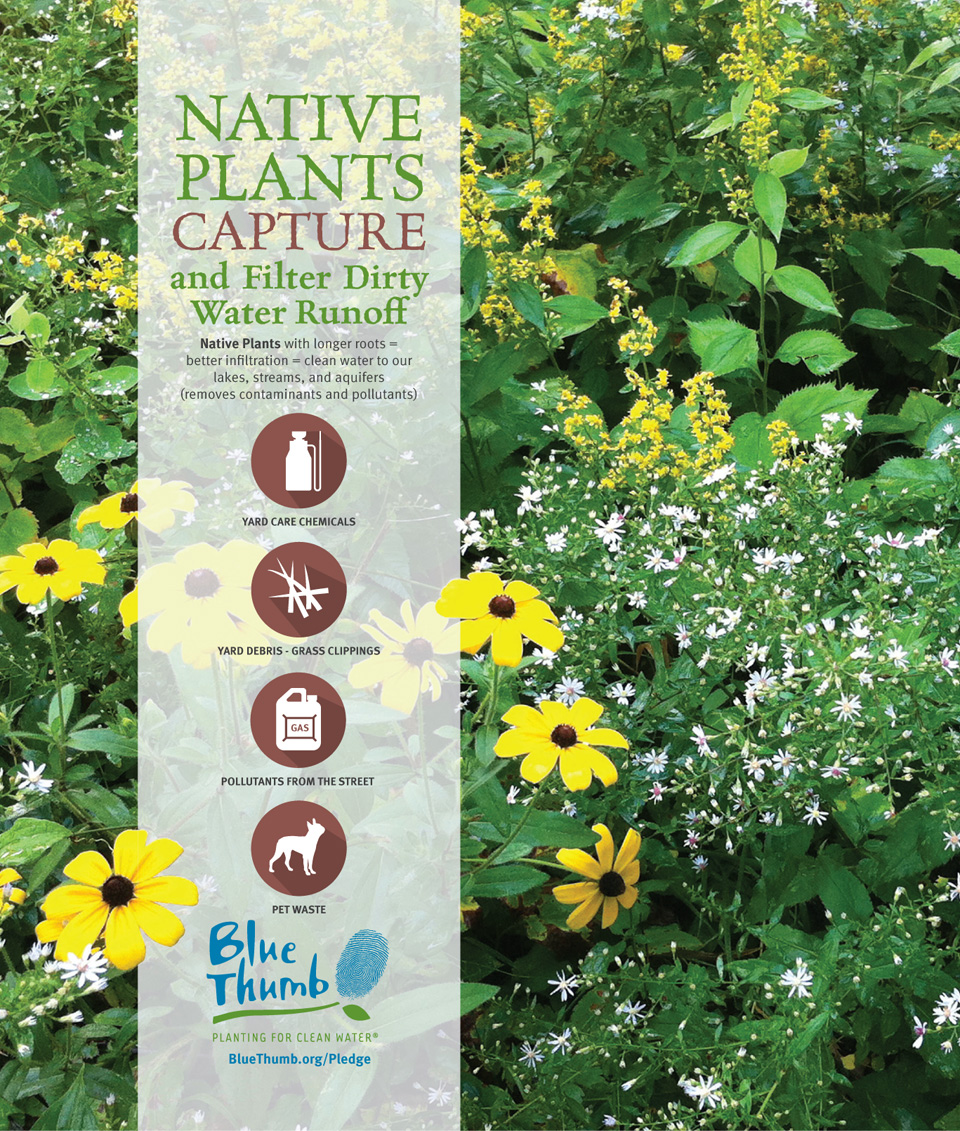 Blue Thumb Native Plants Capture Poster Message