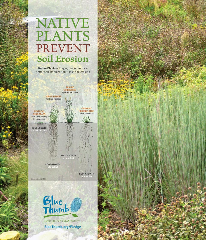 Blue Thumb Native Plants Prevent Soil Erosion