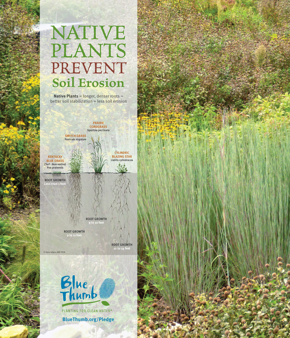 Blue Thumb Native Plants Prevent Soil Erosion