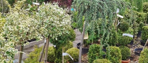 Montar un vivero de plantas mantenimiento de jardines for Importancia de un vivero