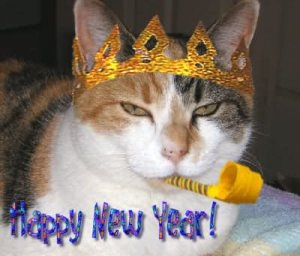 New Years Cat
