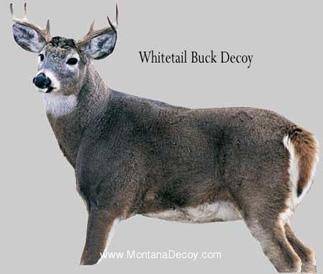 Montana Decoy Whitetail