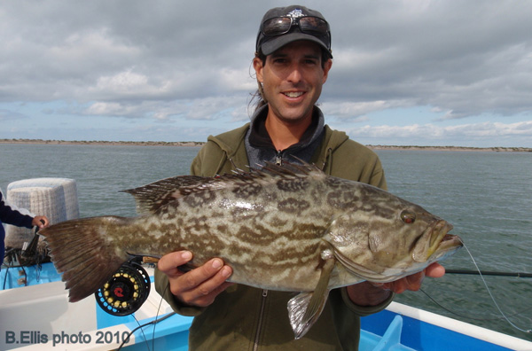 broomtail grouper