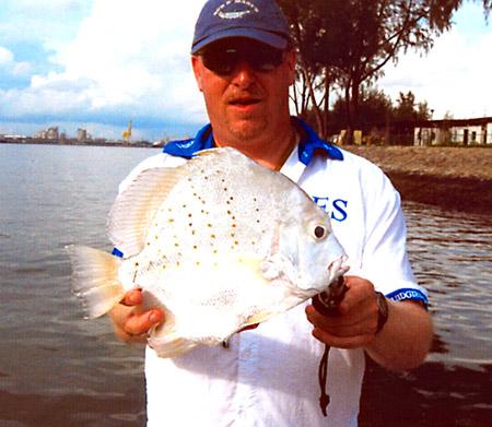 Sicklefish world record
