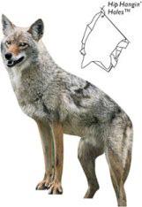 renzo coyote
