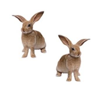 Renzo Rabbit