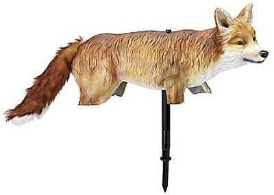 foxxy fox
