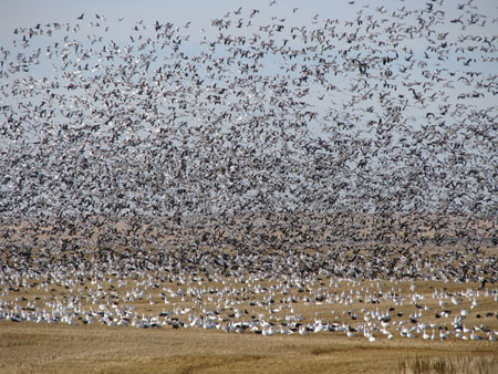 Delta Waterfowl Hunting tips