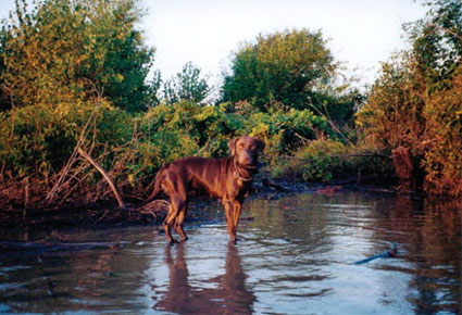 hunting dog hypothermia