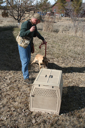 e collar puppy training