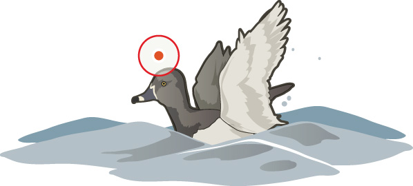 cripple duck shoot