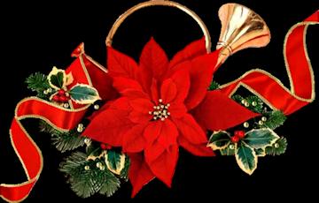 ChristmasCardPoinsettia