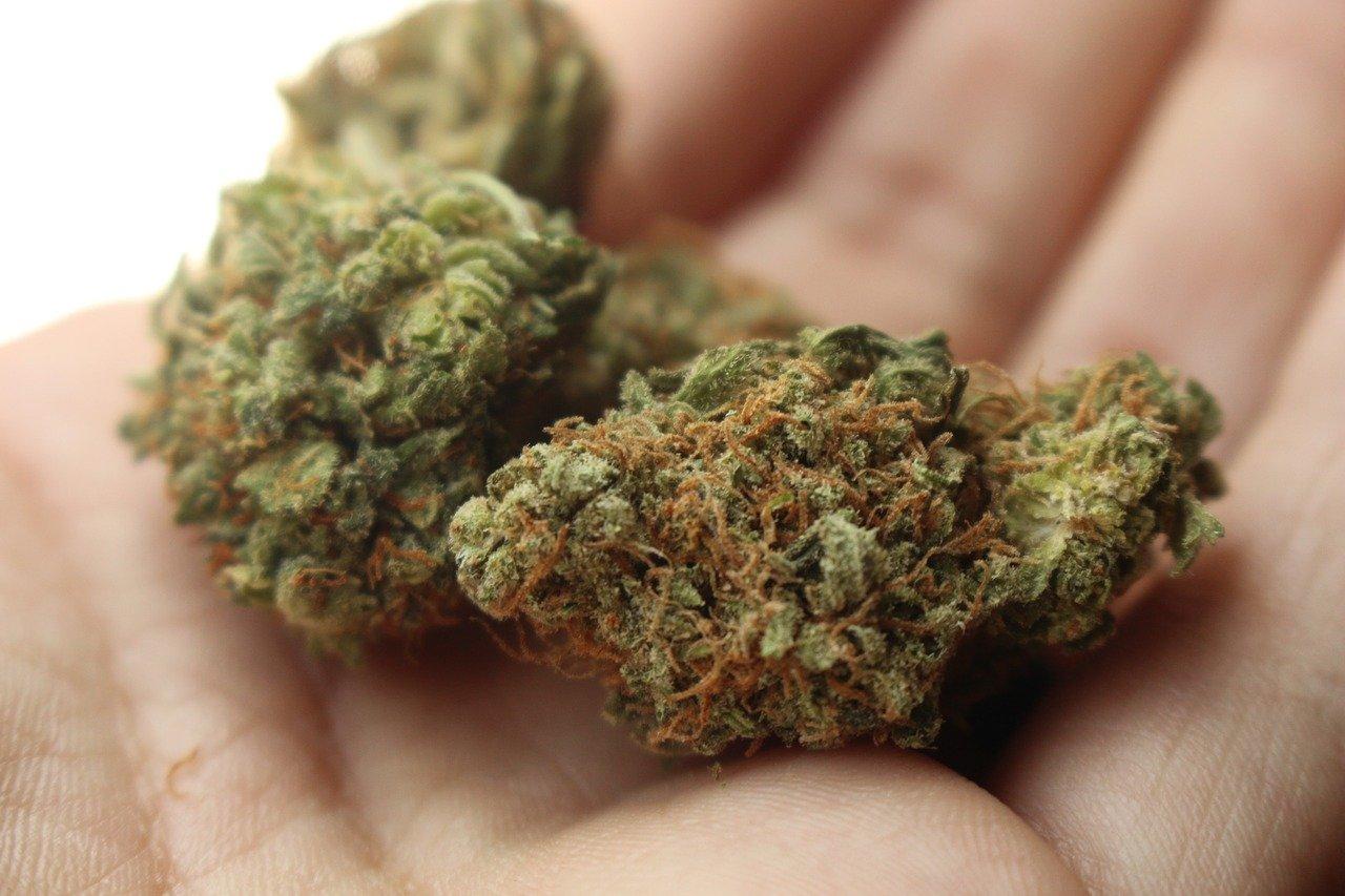 THC stash strain