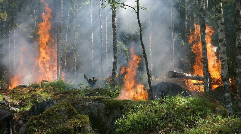 Grant for California Wildfires