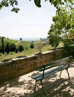 Beaujolais wine region